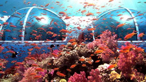 Spectacular Poseidon Undersea Resort In Fiji Design Swan