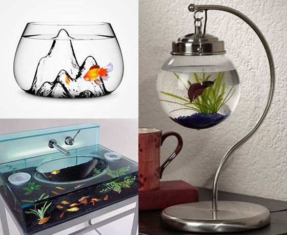 11 Creative Ways to Raise Fish at Your Home