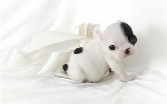 16 Super Cute Baby Puppies Photos