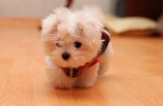 16 Super Cute Baby Puppies Photos