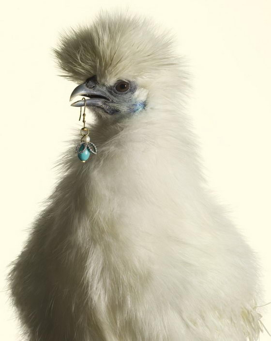 Luxury Chicks: Unusual Fashion Photograph by Peter Lippmann