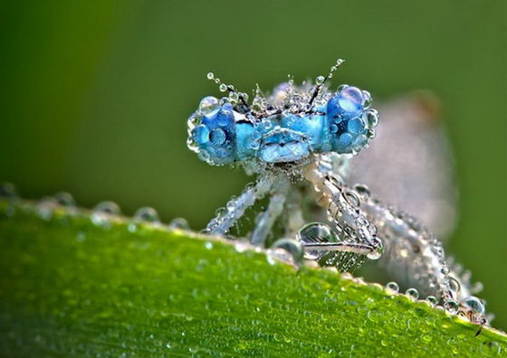 Stunning Macro Photos of Insects Covered With Dew