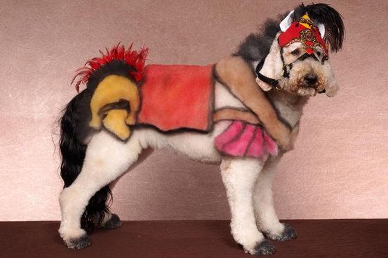 Dog Transformer: Creative Grooming Dog Show