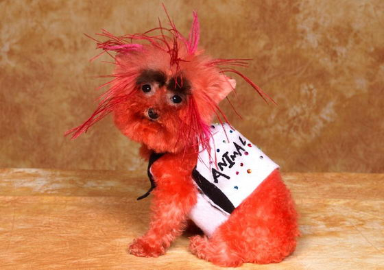 Dog Transformer: Creative Grooming Dog Show