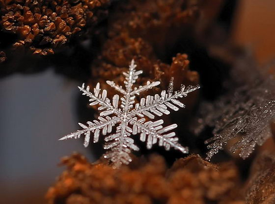 Incredible Snowflake Macro Photography
