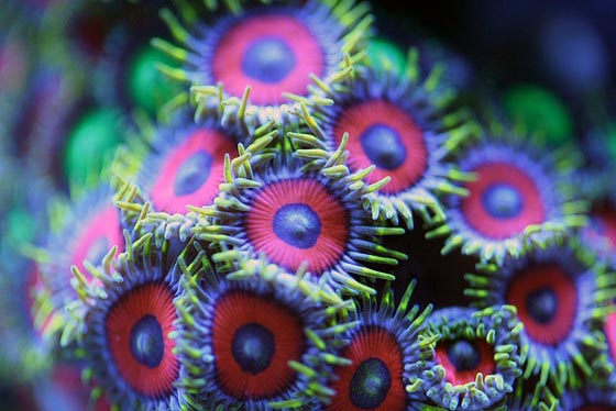 Spectacular Underwater Macro Photography of Corals