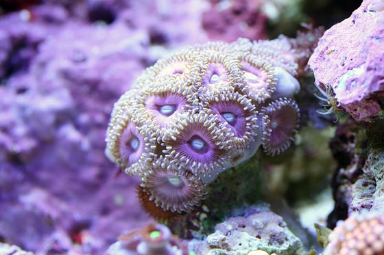 Spectacular Underwater Macro Photography of Corals