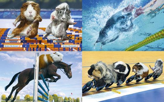 Super Funny Guinea Pig Games Calendar