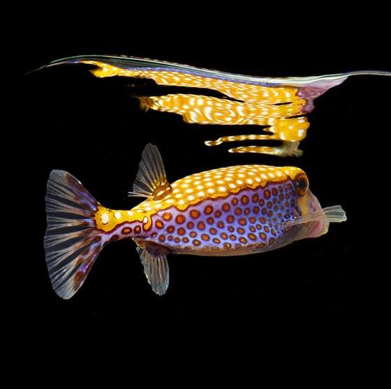 Vibrant Marine Life Photography by Mark Laita