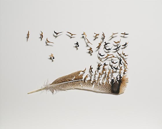 Get Birds out of Feather: Creative Feature Art by Chris Maynard