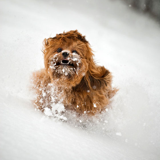 18 Cute Photos of Dog Playing in Snow
