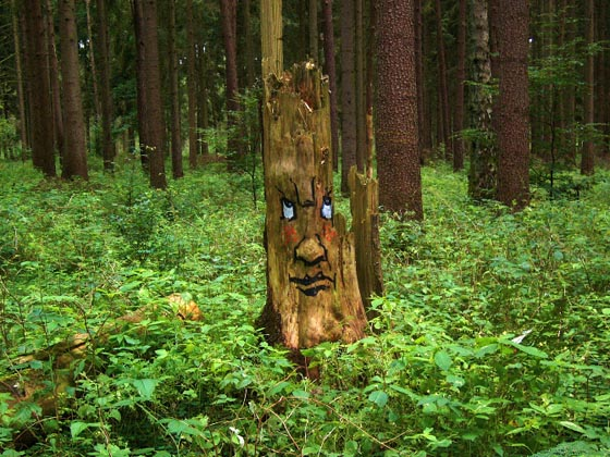 The Tree Project: Expressive Tree Faces on Rotting Trunks
