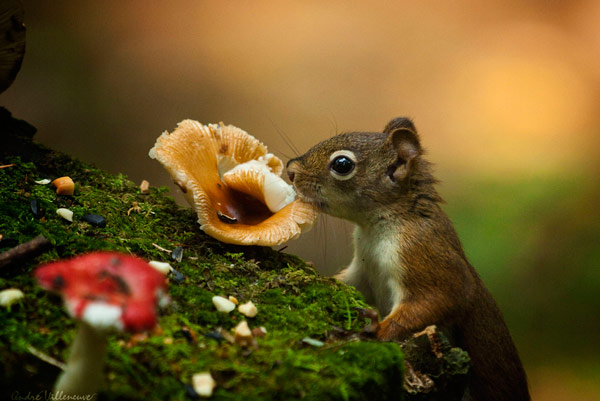 Adorable Squirrel Photograph Captured at Perfect Timing
