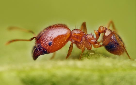 45 Awesome and Innovative Photographs Of Ants