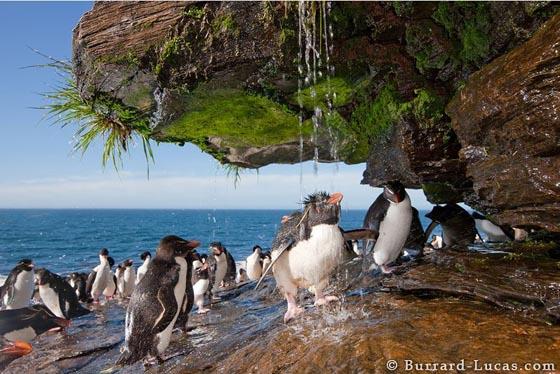 15 Cute Penguin Photographs