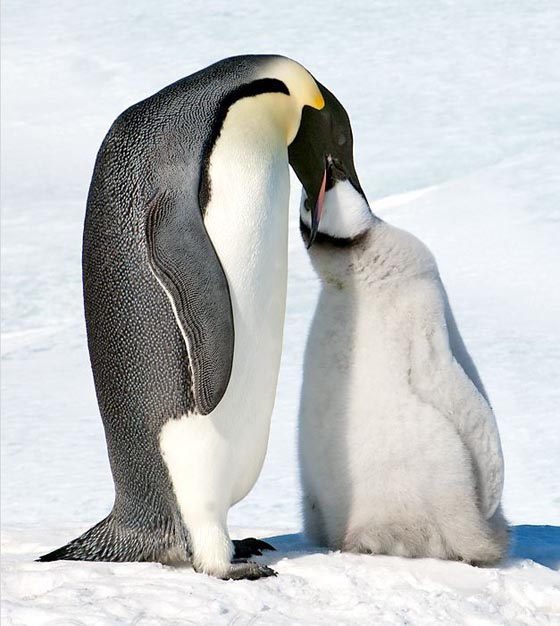 15 Cute Penguin Photographs