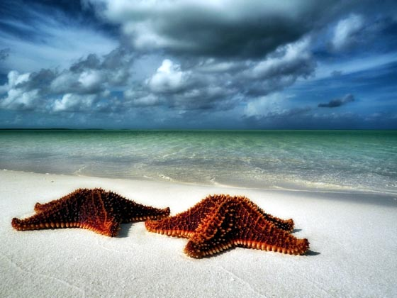 19 Absolutely Beautiful Starfish Photograph