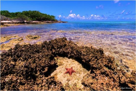 19 Absolutely Beautiful Starfish Photograph