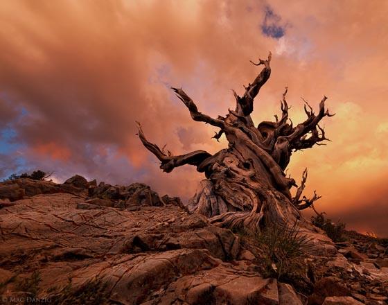 12 Amazingly Beautiful Trees