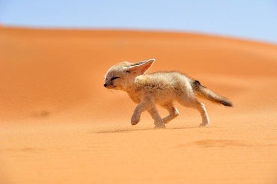 10 Amazing Wildlife Photos From National Geographic Traveler Photo Contest