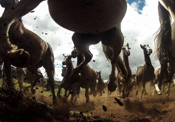 10 Amazing Wildlife Photos From National Geographic Traveler Photo Contest
