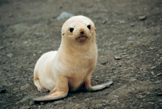 27 Cutest Baby Animals That Will Put a Smile on Your Face