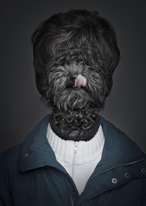 Underdog: How Dog Looks Like if They Dressed up Like Human