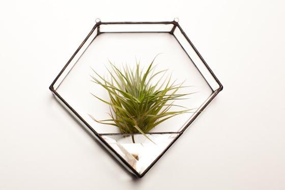 11 Cool Ideas to Create Air Plant Zen Garden