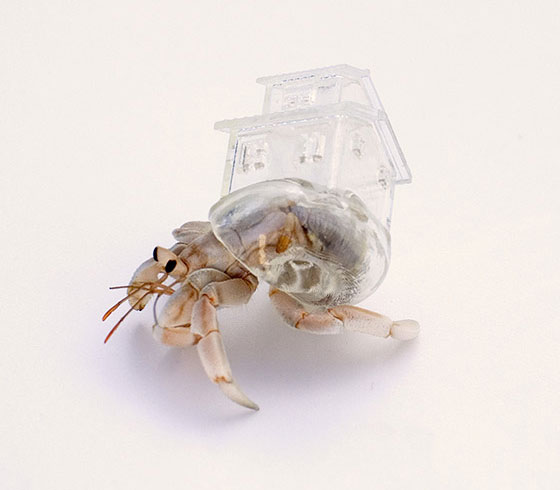 Detailed Crafted Plastic Shelter for Hermit Crab