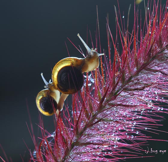 20 Amazing Macro Photographs of Snails
