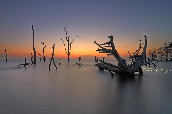 Dead Beauty: Stunning Shots of Dead Trees