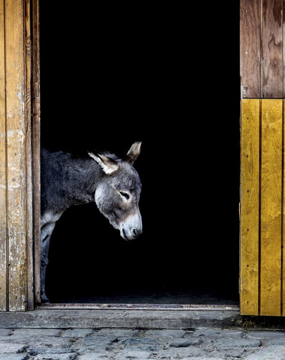 Funny Donkey! Cute Donkey!