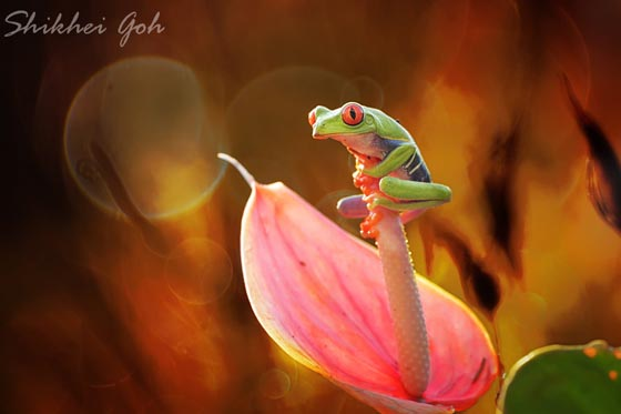 10 Cool Photos of Expressive Frog