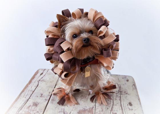 20 Cutest Pet Halloween Costumes Ideas