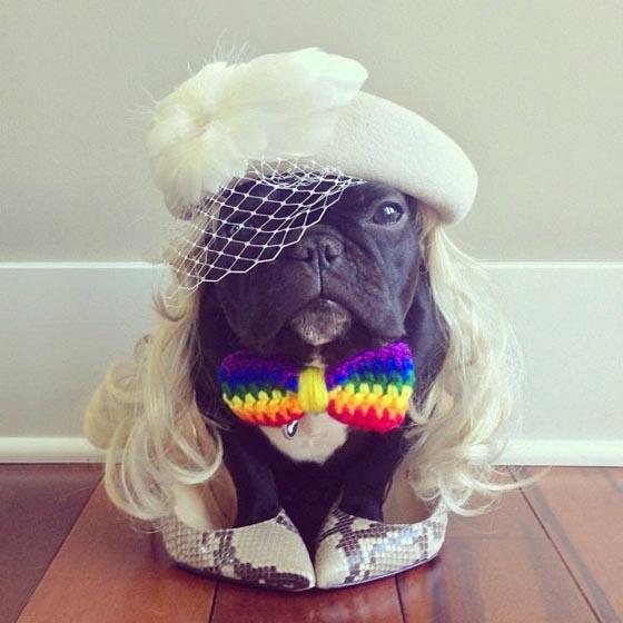 20 Cutest Pet Halloween Costumes Ideas