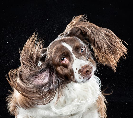 Shake by Carli Davidson: Hilarious Photo Collection of Dogs Shaking in Motion
