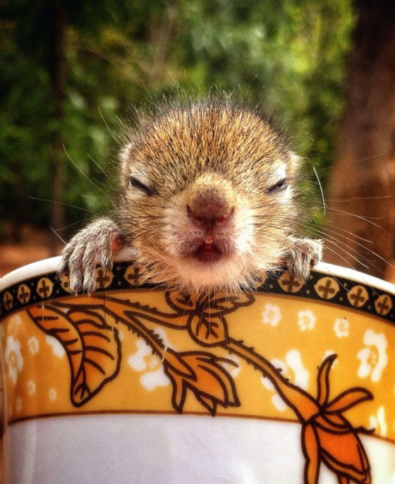 Super Cute Squirrel can Fall Asleep ANYWHERE
