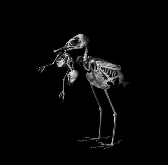 Evolution: Amazing Skeleton Photography by Patrick Gries