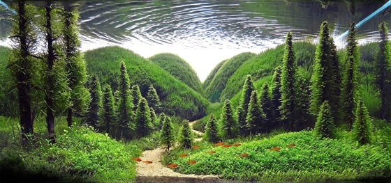 Beautiful underwater landscape aquarium design design swan Aquarium landscape