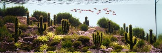 Beautiful Underwater Landscape: Aquarium Design