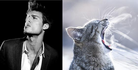 Des Hommes et des Chatons: Handsome Men and Cute Cats in Similar Poses
