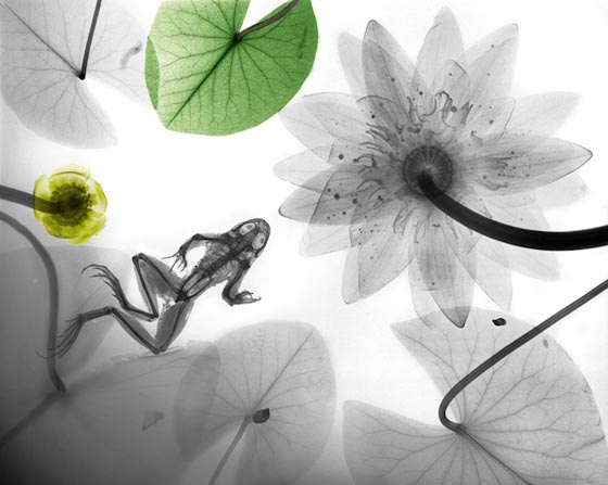 Nature from the inside out: Stunning X-RAY Photography of Nature by Arie van 't Riet