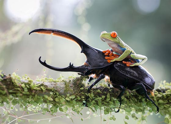 Amazing Wildlife Photography from 2014 Sony World Photography Awards