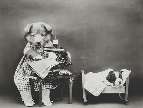 Hilarious pet Photograph from a Century Ago
