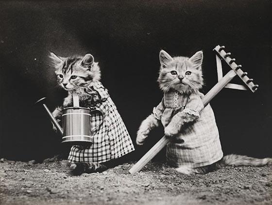 Hilarious pet Photograph from a Century Ago