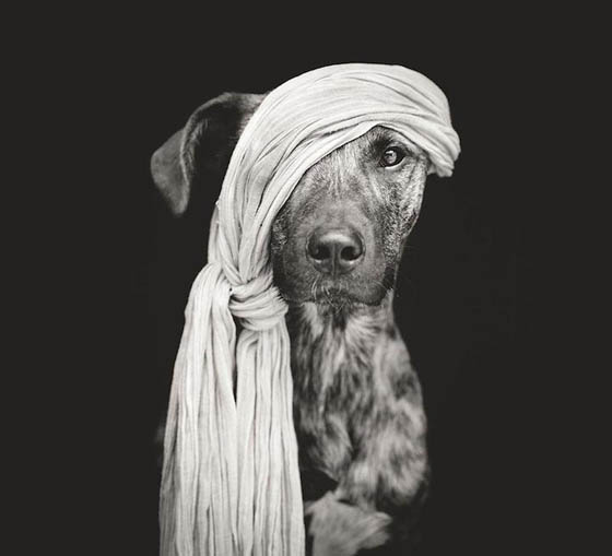 Expressive and Playful Dog Portraits by Elke Vogelsang