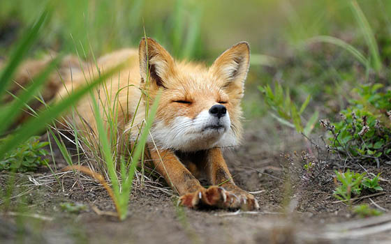 12 Cute Fox Photos That Will Make You Smile