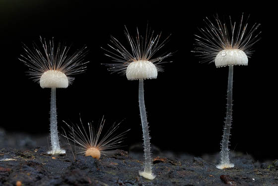 Stunning Micro Photography of Fungi by Steve Axford