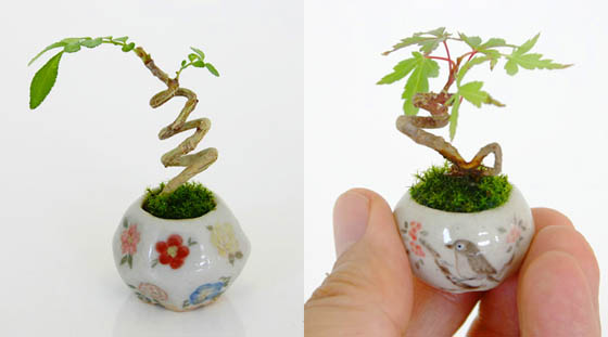 Ultra Small Japanese Bonsai with Height Less Than 3CM