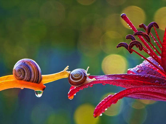 Stunning Macro Photography of Snail by Vyacheslav Mishchenko